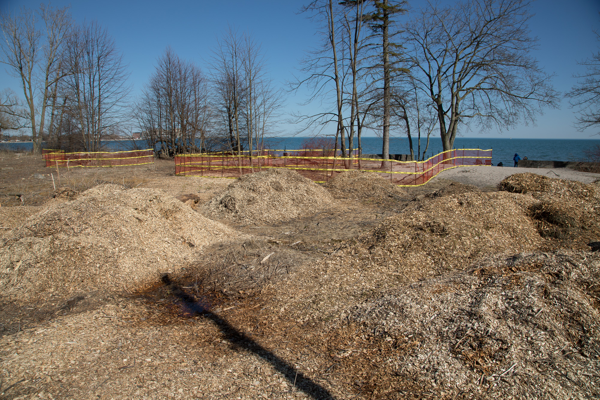 Frenchman's Bay woods cut down