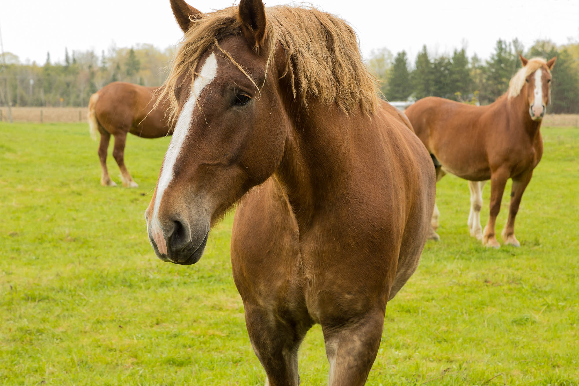 image of horse in country field