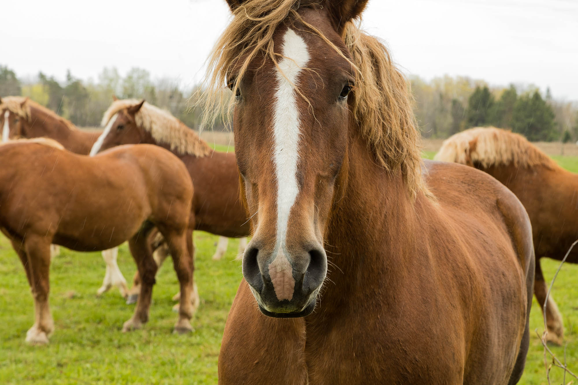 image of horse close up in country field