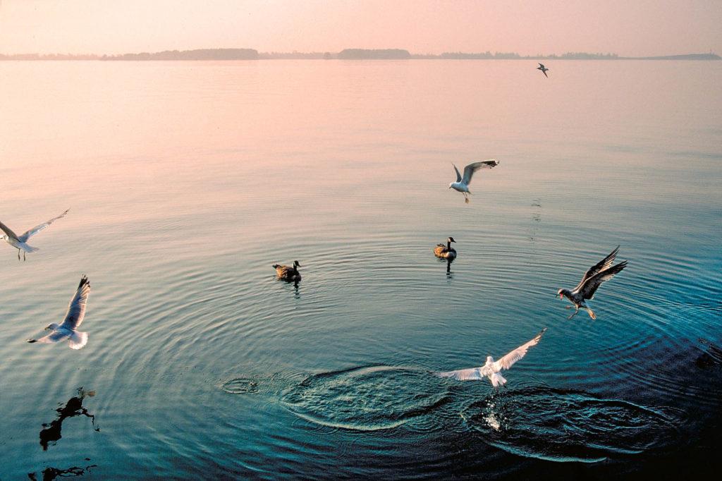 seagulls off Queen's Quay, Toronto, ON