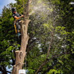 tree specialist up a tree with chainsaw