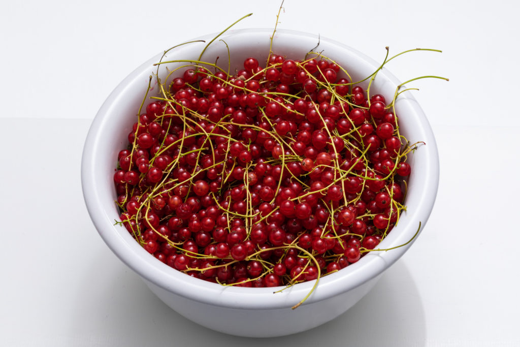 red currants in white bowl on white background